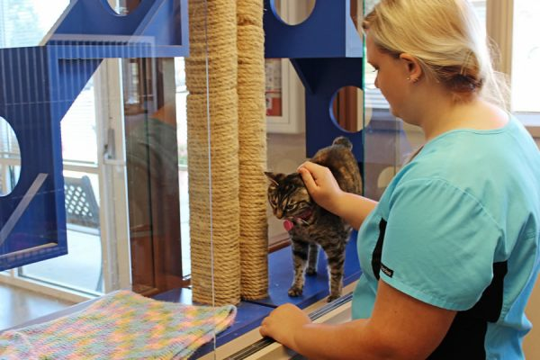 A team member petting a black and tan striped cat in the cat boarding