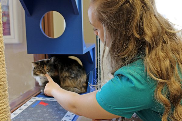A team member booping a orange and brown cat's nose while they play in the cat boarding play room