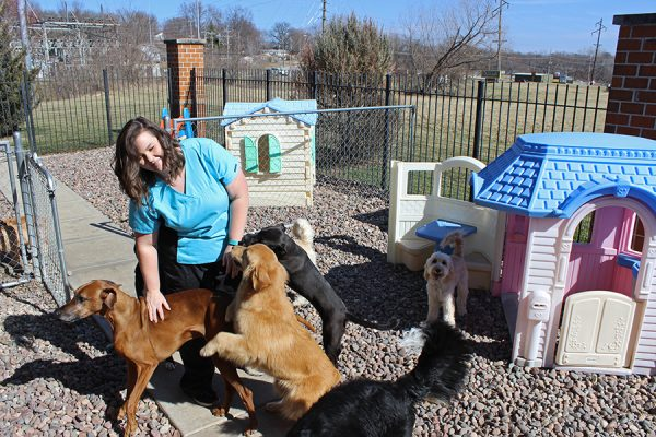 A team member petting the dogs in the doggie daycare. There are several dogs of various breeds enjoying playing