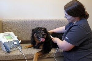 A large black dog with tan paws having a ultrasound performed on him by a veterinarian