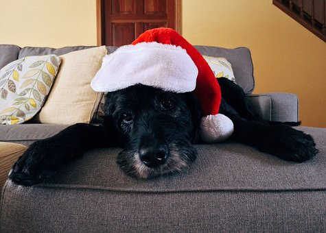 A black dog looking at the camera over the edge of a couch wearing a Santa hat